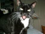 Hazel Lion Meow